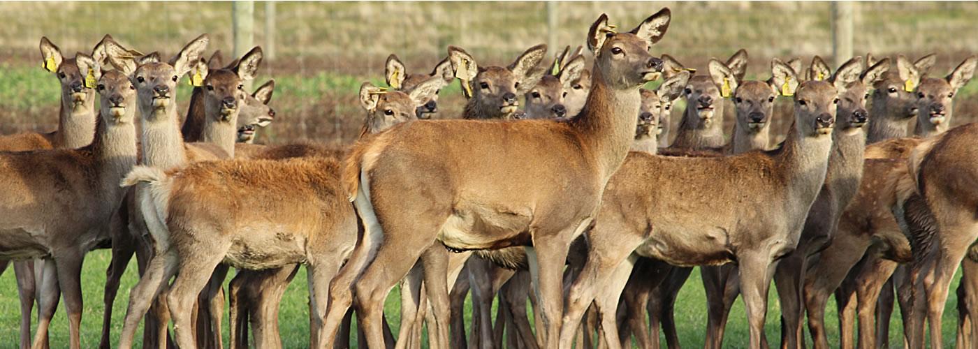 slider-deer1